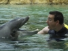 with dolphin - Discovery Cove, Orlando, Florida