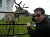 with reindeer on Port Stanley